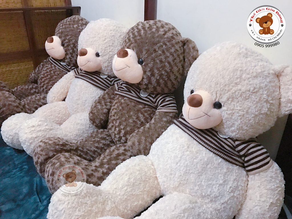 gau-teddy-trang-hcm