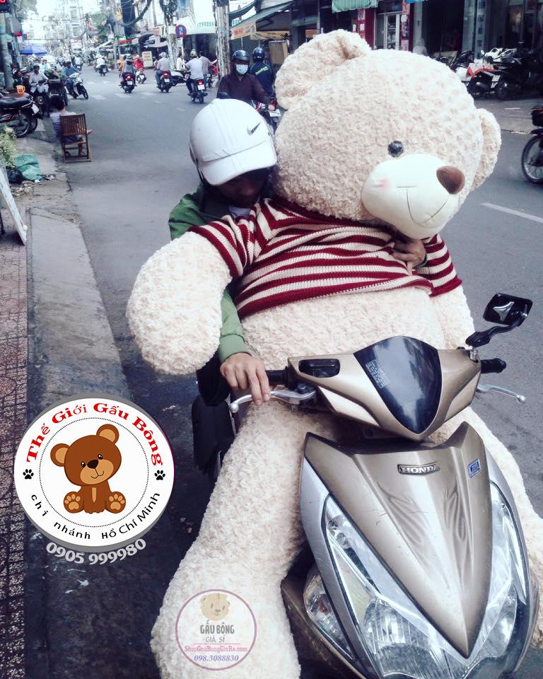 shop-gau-bong-teddy-tphcm (21)